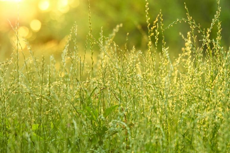 2013_spring_grass-1